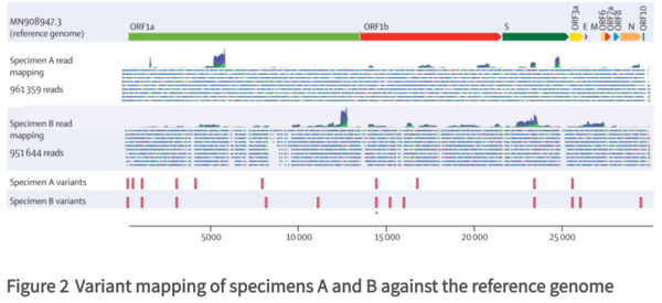 genomic evidence for reinfection figure2.png