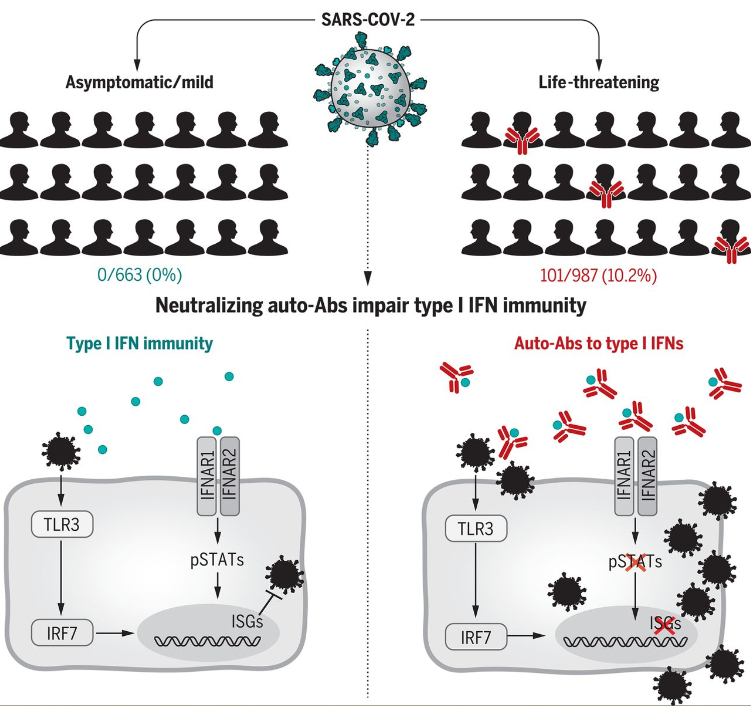 https://smart119.biz/covid-19/images/Autoantibodies%20against%20type%20I%20IFNs%20in%20patients%20with%20life-threatening%20COVID-19.png